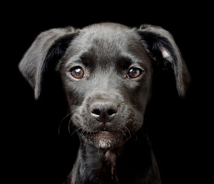 Dog Photographer Of The Year Announces The Winners