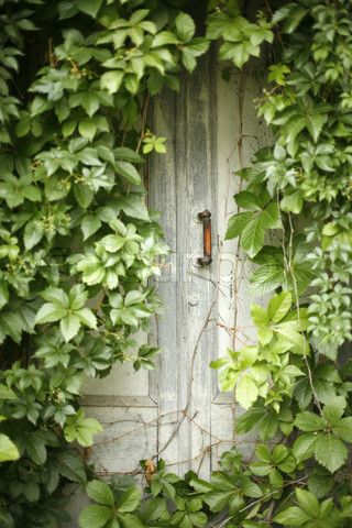 ~ door braided with vine.....NO ONE USES THIS DOOR VERY MUCH......THEY ARE AFRAID ONE OF THE VINES WILL REACH OUT AND GRAB THEM.......I UNDERSTAND IT HAS BEEN KNOWN TO HAPPEN................ccp