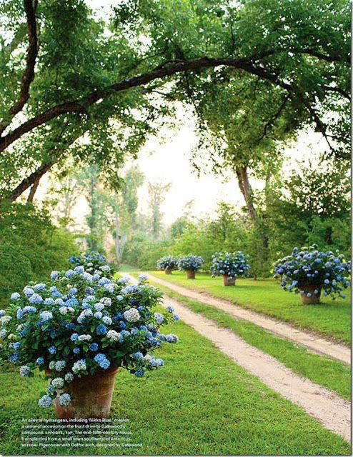 189 best images about jard n huerta en pinterest for Cuidar hortensias exterior