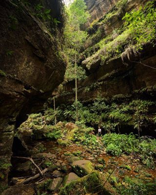 Grand Canyon Track - Blue Mountains National Park, New South Wales | 24 Amazing Australian Walks That Will Take Your Breath Away