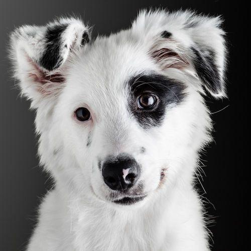 so cute dog.
