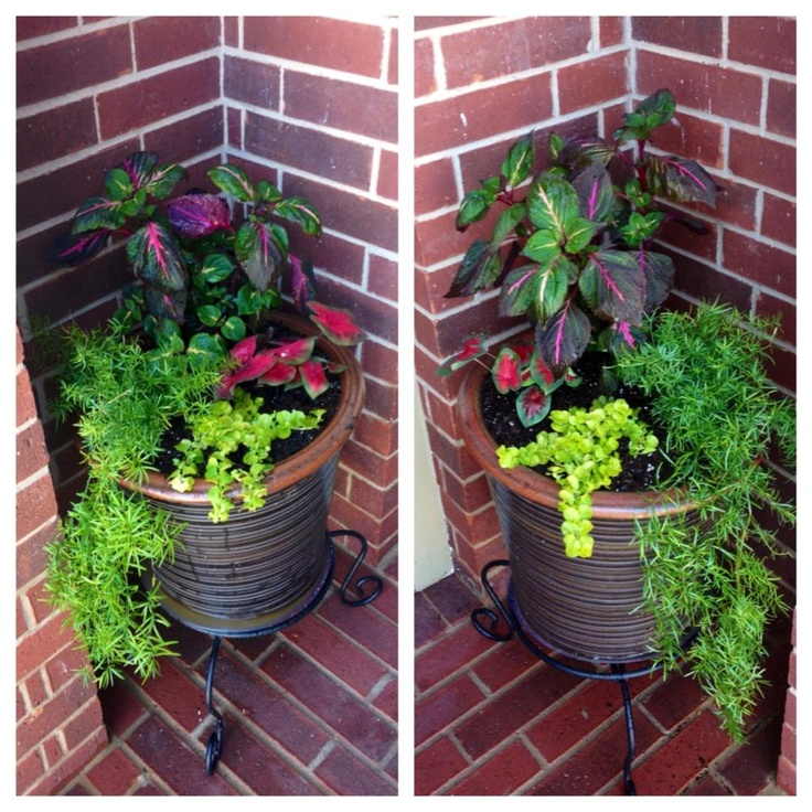 Front Porch Shade Plants