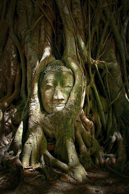 Une tête de Bouddha au temple de Wat Mahathat, Thailande.