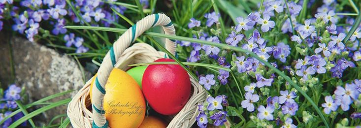 Easter menu – Cooking without Limits