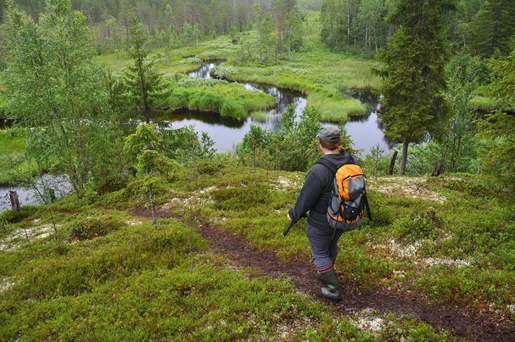 Kumpi voittaa, kirves vai kulttuuri? | Suomen Luonto