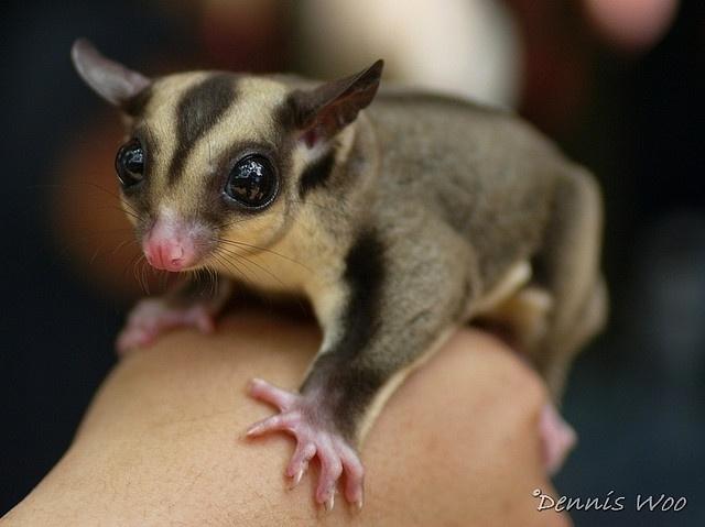 World's cutest animal!