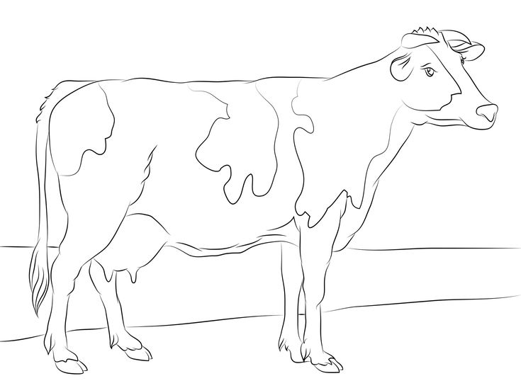 free cow coloring pages printable httpprocoloringcomcow coloring
