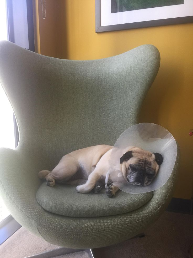 Our office dog Lily has had a hard week of it...TGIF http://ift.tt/2s8EdMn