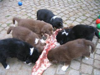 Mark's Dog Blog: Are Dogs Carnivores Or Omnivores?