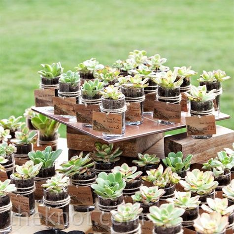 "Can you tell I love ""modern"" details? Succulents escort cards/favors-- that you guests can plant when they get home. Can you say eco-friendly??"