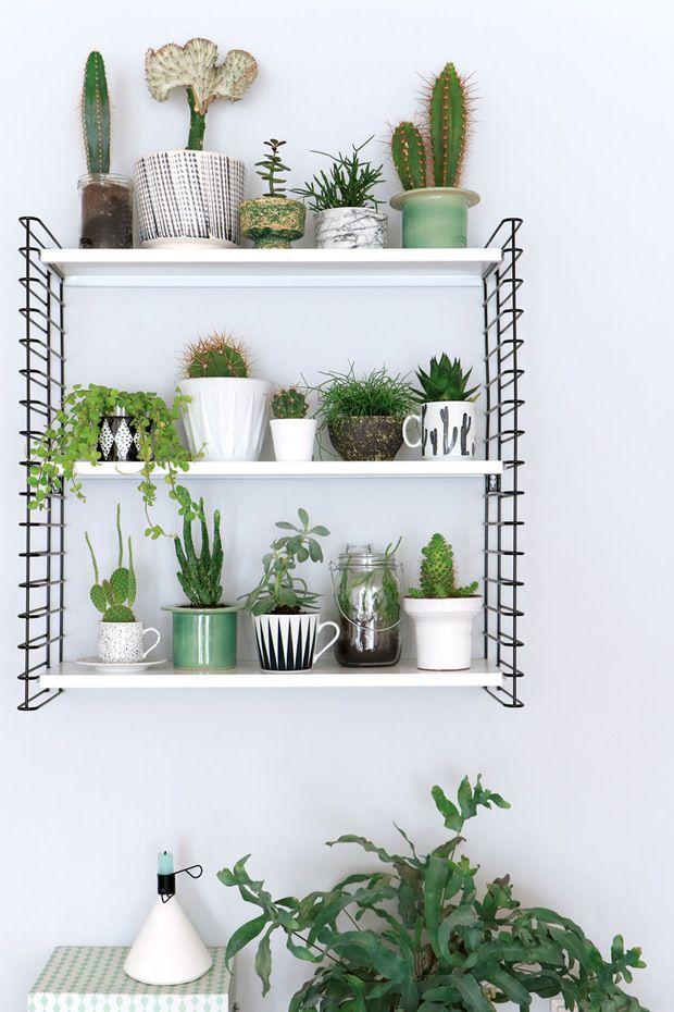 Plantitas de cactus y crasas para decorar una estanter a for Estanteria plantas interior