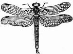 Bug art: Dragonfly Drawing, B W Pencil Drawings, White Drawing, Fartsy Stuff, Art Prints, Craft Ideas, Art Crafts Make, Art Inspirations