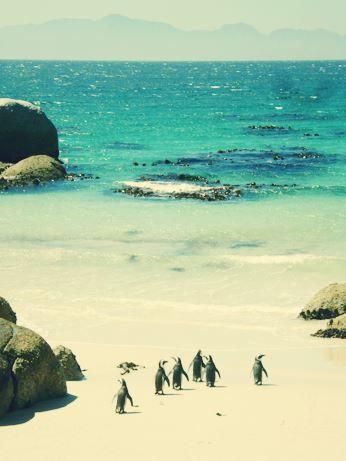 Meluk & foto pose Duckface sama pinguin. - African Pinguins @ Cape Town, South Africa #BebasLiburan