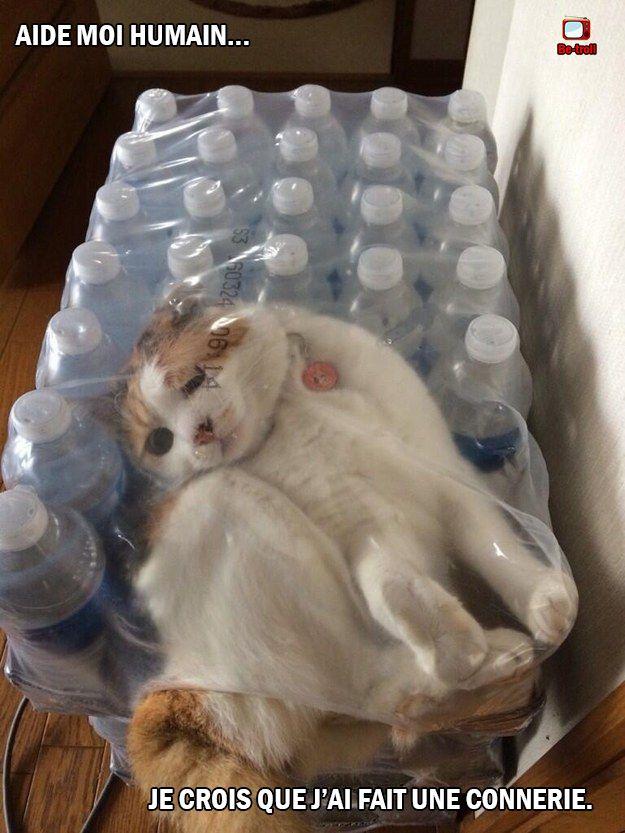 Aide moi humain, je crois que j'ai fait une connerie #chat #animaux