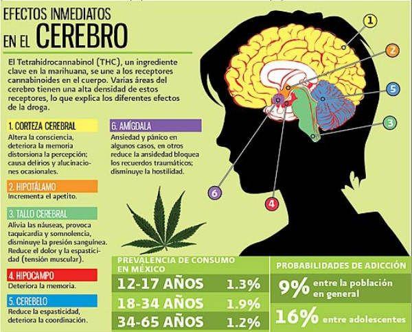 ¿Cómo afecta el consumo de la marihuana al cerebro?