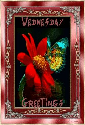 Wednesday Greetings wednesday wednesday quotes wednesday image quotes wednesday quotes and sayings wednesday gifs wednesday quote gifs