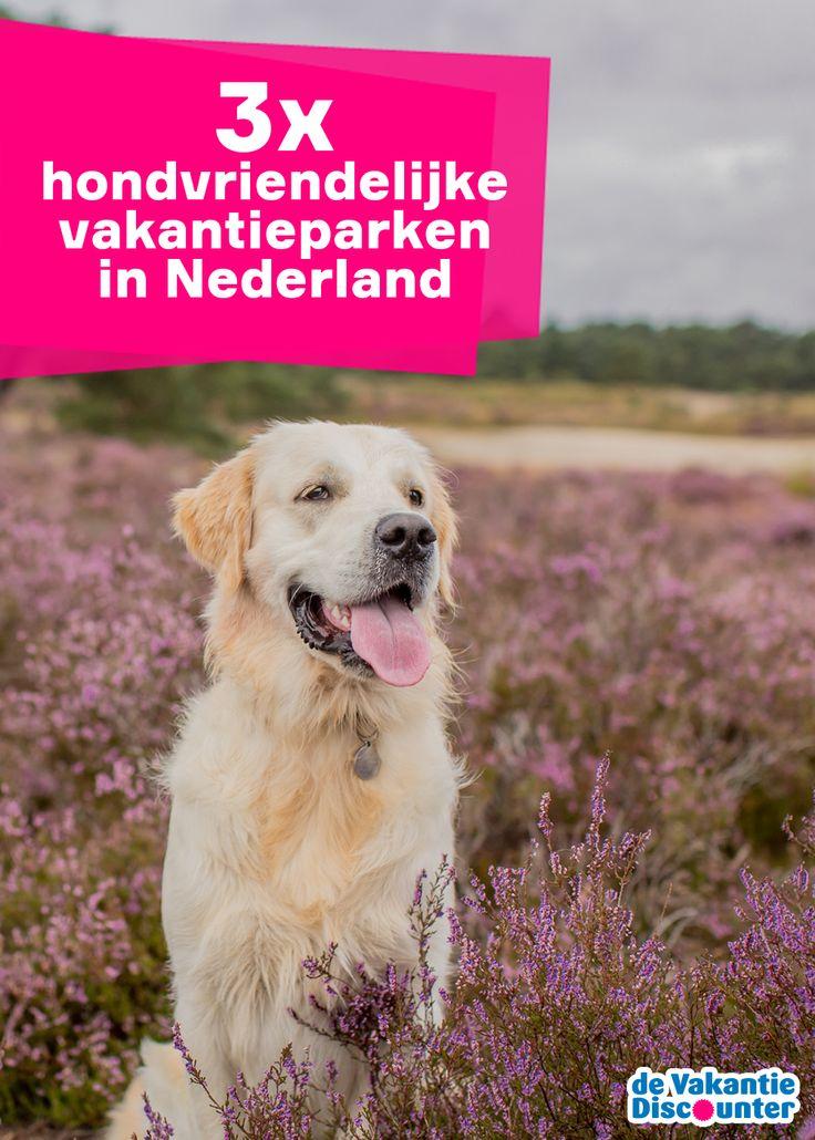 Een geslaagd weekendje weg met de hond: het is een flinke uitdaging. Tijd om hondvriendelijke vakantieparken in Nederland te selecteren.