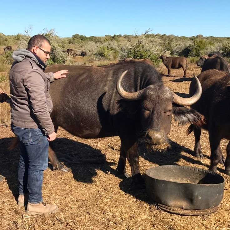 Proud to be Veterinarians Such a surreal experience meeting an African buffalo!  Love of tag please do =>Follow @veterinarians.no1 for daily pics  Via  @ myvetexperience  #veterinarians  #veterinary #veterinarian #vetzoot #animalrescuer #exoticsveterinarian #animalrescue #vetlife #animallove #AnimalCare