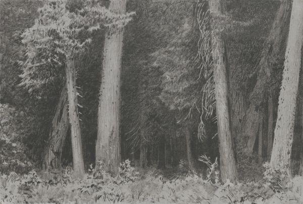 Wnętrze lasu - Leon Wyczółkowski