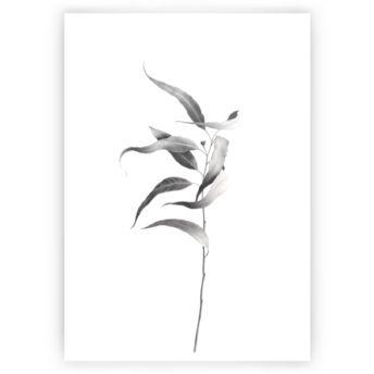 Image for australian native flower sketch