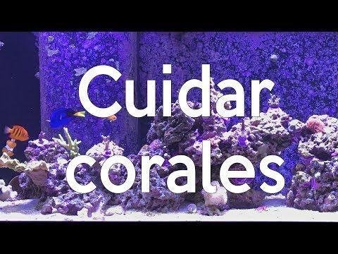 (5) Cuidados de corales en una pecera marina | AcuaTV - YouTube
