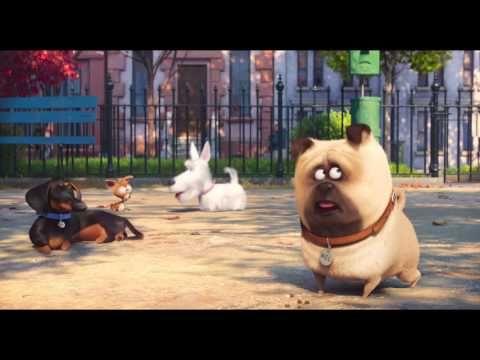 Sekretne życie zwierzakow domowych - trzeci zwiastun - YouTube