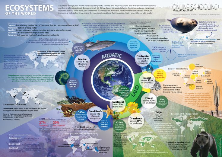 infographic ecosystem-v6: One Illustration of the impotance of biodiversity in biomes and environmental protection