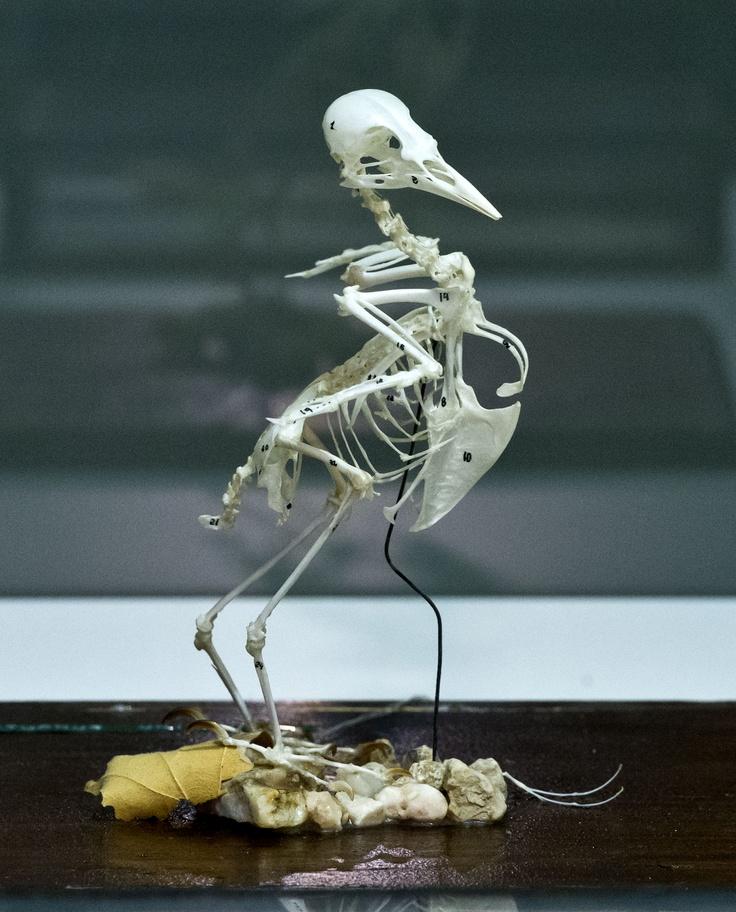 Restos fósiles de ave.