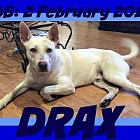White River Junction, Vermont - German Shepherd Dog. Meet DRAX, a for adoption. https://www.adoptapet.com/pet/20800727-white-river-junction-vermont-german-shepherd-dog-mix