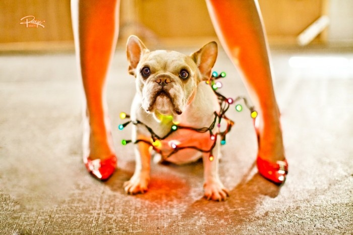 Google Image Result for http://www.robynarouty.com/wp-content/uploads/2012/07/ra_frenchie1-e1342757073599.jpg
