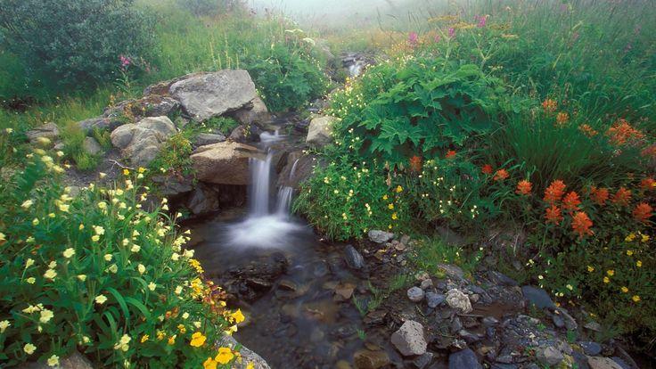 5 часов! Пение птиц Звуки природы Журчание ручья для ...