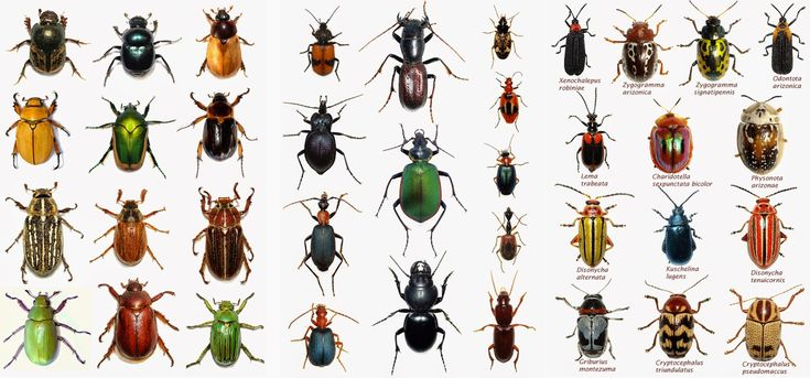 Arizona: Beetles, Bugs, Birds and more: August 2014