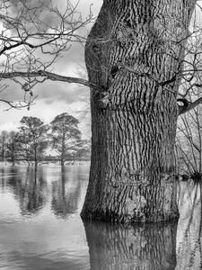 The Tree Photographer - Gabriel Hemery | Photocrowd Photo Contests