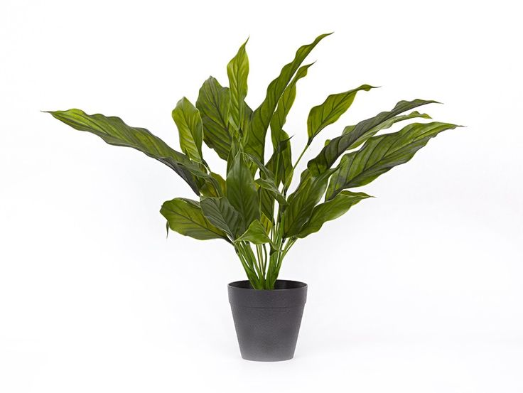A full bodied & realistic looking Spathiphyllium potted plant. Perfect for adding a touch of greenery into your living space.