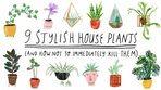 Τα εννέα top φυτά εσωτερικού χώρου που πρέπει να έχεις στο σπίτι