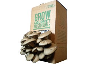 It's easy to grow your own pearl oyster mushrooms at home with this growing kit. The compost is made from recycled coffee grounds and recycled shredded cardboard. Just make a small hole in the bag, sprinkle daily with water, and in two weeks you'll get your first crop of delicious mushrooms! Will produce up to 500g of mushrooms over eight weeks. £14.99