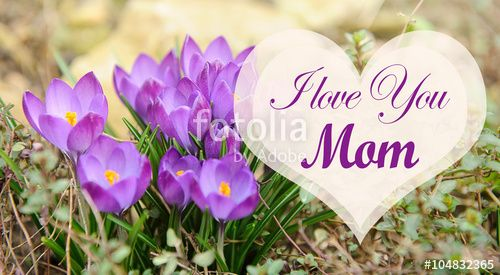 """Download the royalty-free photo """"Mothers day card with flowers and heart. Purple flowers for mother day. Mothers day background and mother day flower. Mothers day gift. Happy mother's day """" created by stillforstyle at the lowest price on Fotolia.com. Browse our cheap image bank online to find the perfect stock photo for your marketing projects!"""