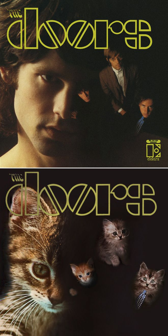 Iconic Album Covers Recreated With Kittens In 2020 Album Covers Famous Album Covers Iconic Album Covers