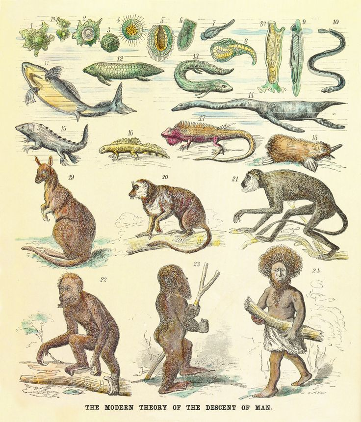 Great chain of being - Wikipedia, the free encyclopedia