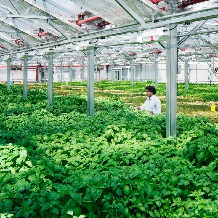 """Viraj Puri is a cofounder and CEO of @gothamgreens, which grows pesticide-free produce using ecologically sustainable methods in climate-controlled greenhouses in cities. The leading urban-farming company has built and operates more than 170,000 square feet of rooftop greenhouses across four facilities in New York and Chicago. """"Modern agriculture feeds billions each day but has an enormous impact on natural resources. Our cities across the country and around the world don't have a lot of…"""