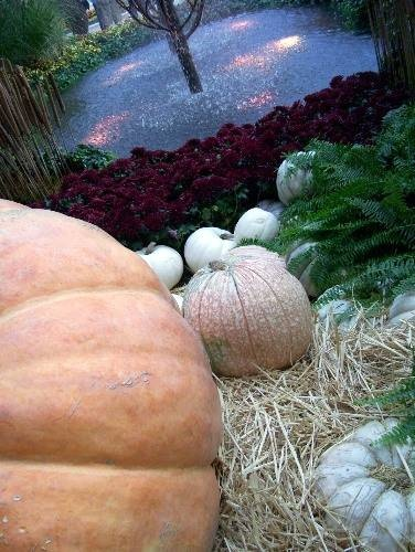 "Mysterioso  Autumn in Vegas  Bellagio Conservatory and Botanical Garden:  Photo by Lisa Hallett Taylor  Pumpkins and squash surround a glass-pebble ""pond"" at Bellagio Conservatory's Harvest Show"