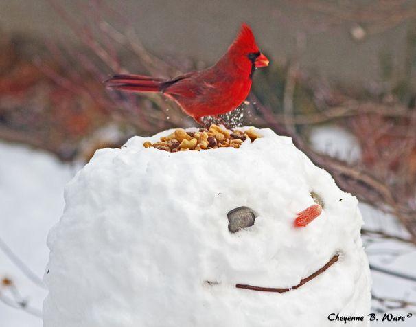 Too cute for words.Snow Sculpture, Winter, Birds Feeders, Bird Feeders, Cute Ideas, Christmas, Snowman, Kids, Cardinals