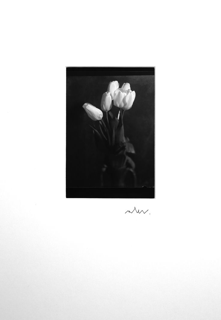 For sale on Livin'art n. 1 di 10  TULIPANI ROSA - PINK TULIPS  Photo made with Optical Bench  cm 13x910 mounted on professional passepartout cm 50x35  Printing Techniques: contact plate on barium paper ILFORD – Edition 10