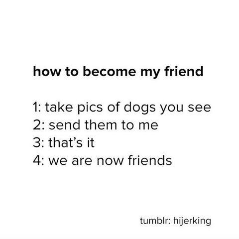 "14k Likes, 555 Comments - BuzzFeed Animals (@buzzfeedanimals) on Instagram: ""send me dog pics so i know it's real 🐶"""