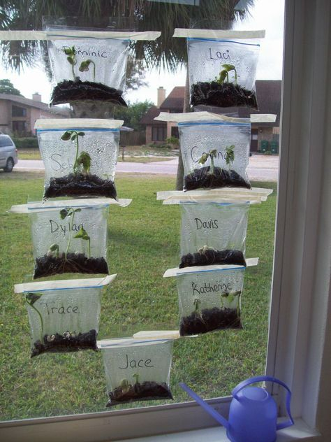 #littlehandsbigplans Learning about seeds, sprouts, parts of a plant. Science!