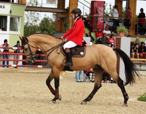 Equestrian ~ I need this horse.