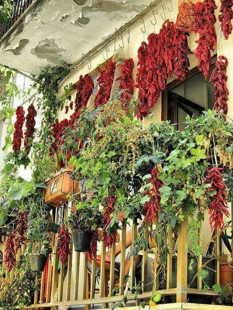 Il paradiso all'improvviso!  Calagusto.com  #calabria #food #piccante #followus #picofthaday #italy #italia #peperoncino #nduja #calabrianews #calabriadascoprire
