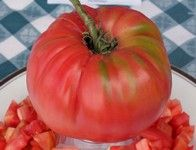 Mortgage Lifter Tomato: a large pink heirloom beefsteak with a legendary history.  Learn all about types of tomatoes and how to classify them at http://www.tomatodirt.com/tomato-varieties.html.