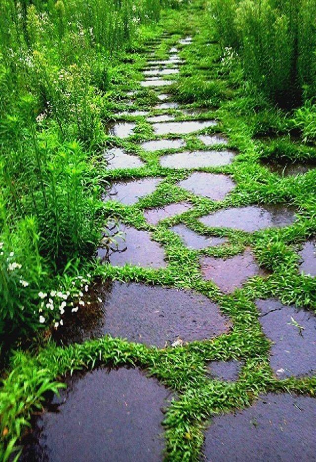#Gardens | #garden | #gardening | Some of the best photos are taken in the rain