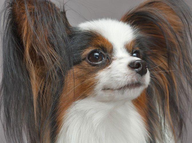 28 fotos de cães de raça